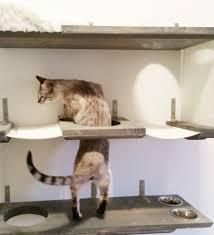 cat hammock bed combo kitty cat wall shelves by shelves cat