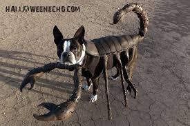 Walrus Halloween Costume Halloween Costumes Echo Boston Terrier