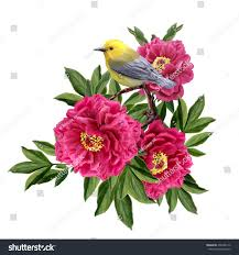 Peony Flowers Little Yellow Bird Sitting On Branch Stock Vector 292486172