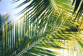 palm fronds for palm sunday palm sunday easel ain t easyeasel ain t easy