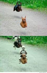 Wiener Dog Meme - stormtrooper speeder wiener dogs weknowmemes
