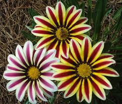 flowers in november file bee in flowers jpg wikimedia commons