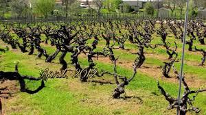 nine gables vineyard and winery plymouth california youtube