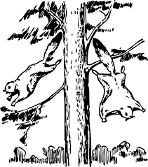 free squirrel coloring pages clip art library
