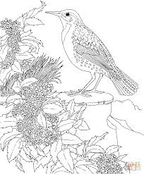 meadowlark and oregon grape state bird and flower coloring page