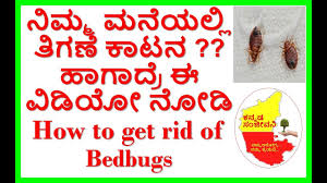 natural bed bug remedies how to get rid of bed bugs naturally kannada sanjeevani youtube