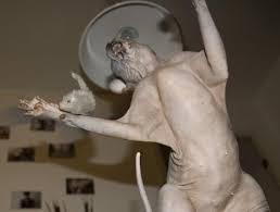 Hairless Cat Meme - the sphynx cat album on imgur