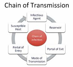 chain of transmission disease detectives wiki fandom powered