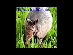 Armadillo Meme - your an armadillo meme 50 sub thanks youtube