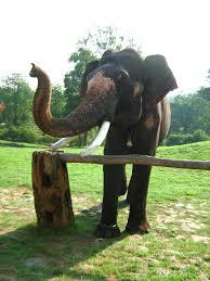 mudumalai elephant population increasing or decreasing bandipur