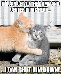 Cute Cat Memes - 50 very hilarious cute cat memes golfian com