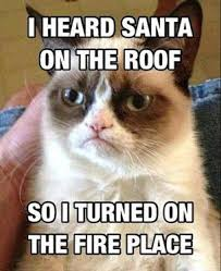 Christmas Cat Memes - 30 funny animal christmas quotes cutest cats