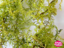 dryed natural green moss ideal for any type of resin inclusions