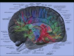 Brain Mapping Map Of The Human Brain 25 Best Ideas About Human Brain Mapping On