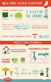 infographic on how to attract birds to your yard