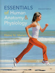 essentials of human anatomy u0026 physiology elaine n marieb