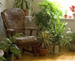 avoiding houseplant issues information to keep houseplants