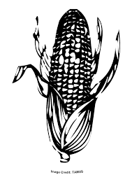 corn on the cob picture free download clip art free clip art