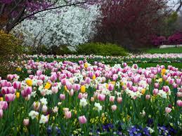 Dallas Arboretum And Botanical Garden Dallas Arboretum And Botanical Garden Tour