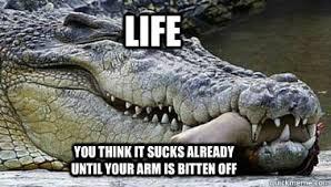Alligator Meme - alligator funny baby meme funny best of the funny meme