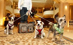 halloween pet background here u0027s how much it really costs to travel with your dog travel