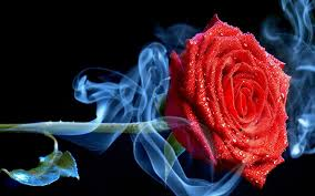 ssmoking rose 985143 wallpapers13 com