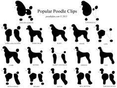 different styles of hair cuts for poodles poodle grooming chart click here to find out more http