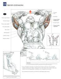 Incline Bench Muscle Group Tricep Extensions Aka Skull Crushers Incline Or Flat Bench Can