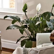 home decor plants 2017 grasscloth wallpaper