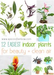 Plants To Grow Indoors 12 Easy Indoor Plants For Beauty Clean Air Indoor Plants And