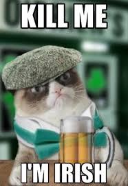 Grumpy Cat Coma Meme - grumpy mctard irish cat funny pinterest grumpy cat meme and cat