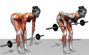 Bench Barbell Row Bent Over Barbell Row Guide U2022 Bodybuilding Wizard