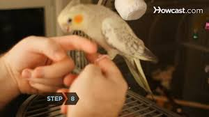 how to hand train a bird youtube