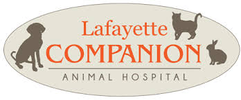 Comfort Dental Lafayette Co Lafayette Companion Animal Hospital Veterinarian In Lafayette