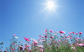 Flower Pictures Free Wallpaper Sunshine Wallpapersafari