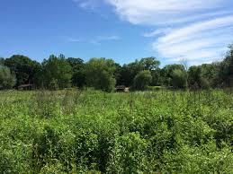 plant communities environmental nature center office of undergraduate research blog 6 16 6 17 u2013 wildwood nature