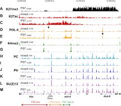 h3k27 modifications define segmental regulatory domains in the
