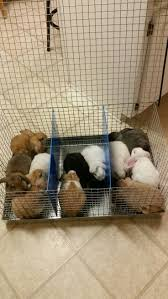 Homemade Rabbit Cage 136 Best Rabbits Images On Pinterest White Bunnies Rabbits And