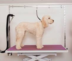 Dog Grooming Table For Sale Large Dog Grooming Table For Sale Best Dog Grooming Table