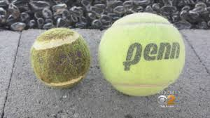 small tennis balls pose big threat to large dogs cbs los angeles