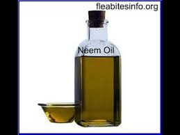 Can Bleach Kill Bed Bugs Bed Bugs Remedy Prevent Bed Bug Infestation With Natural Neem Oil