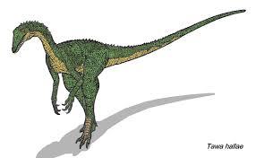 tawa dinosaur wikipedia