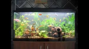 creative diy aquarium decorating ideas youtube