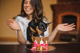4 dog birthday cake ideas your dog will love dog training nation