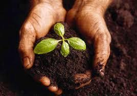 image gallery tree seeds