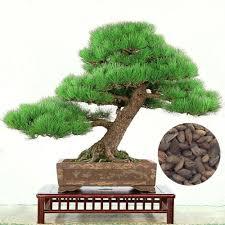 online buy wholesale japanese tree from china japanese tree