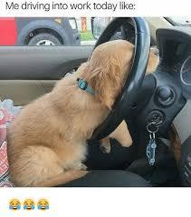 Dog Driving Meme - driving memes