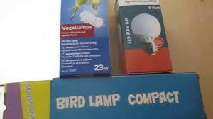 Avian Sun Floor Lamp by