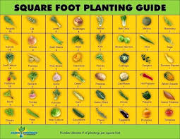 Companion Gardening Layout Square Foot Gardening Square Foot Gardening Layout 4 4 Tetbi Club