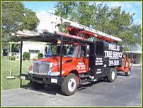 tree service tree removal tree service companies clearwater
